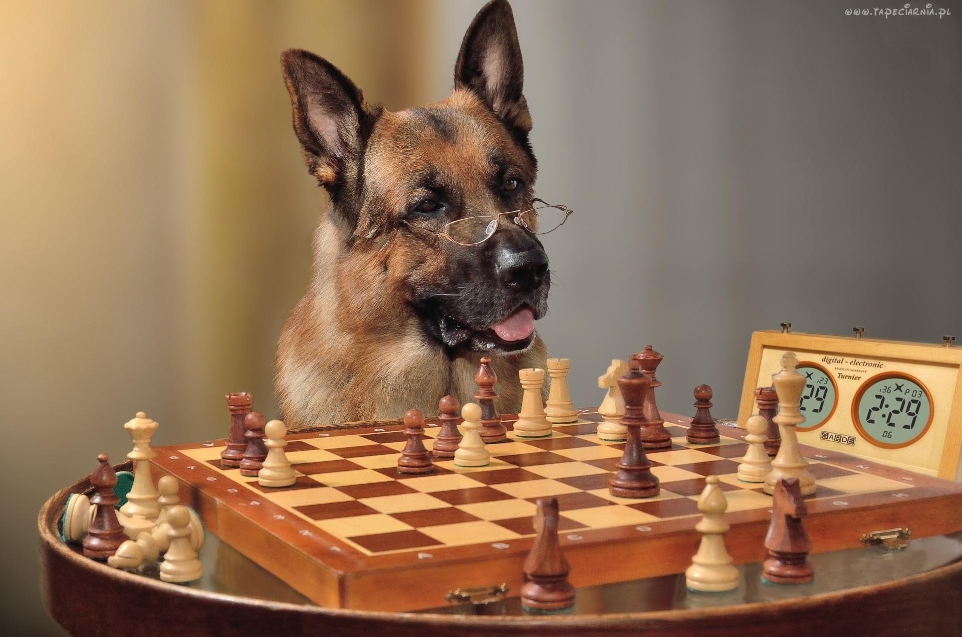 Tapeta szachowa 5